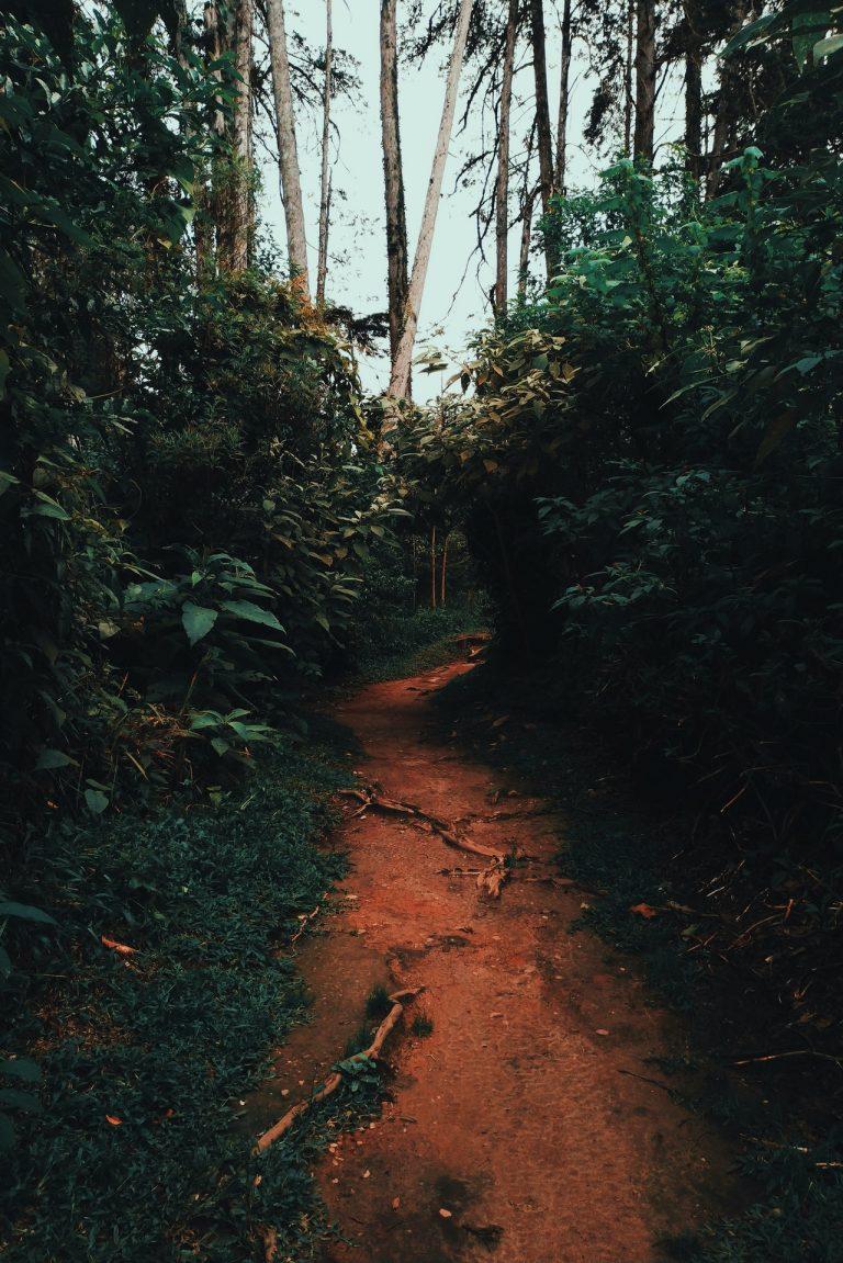 Piesze wędrówki leśnymi szlakami - czy warto?